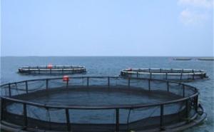 Резервуары, плавучие клетки и рыбные садки