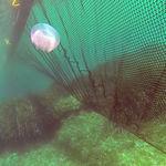 заграждение против медуз / плавучее / для спокойной воды