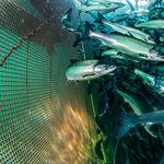 сетка для аквакультуры / для клетки для рыбы