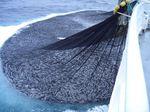 сетка для рыбной ловли